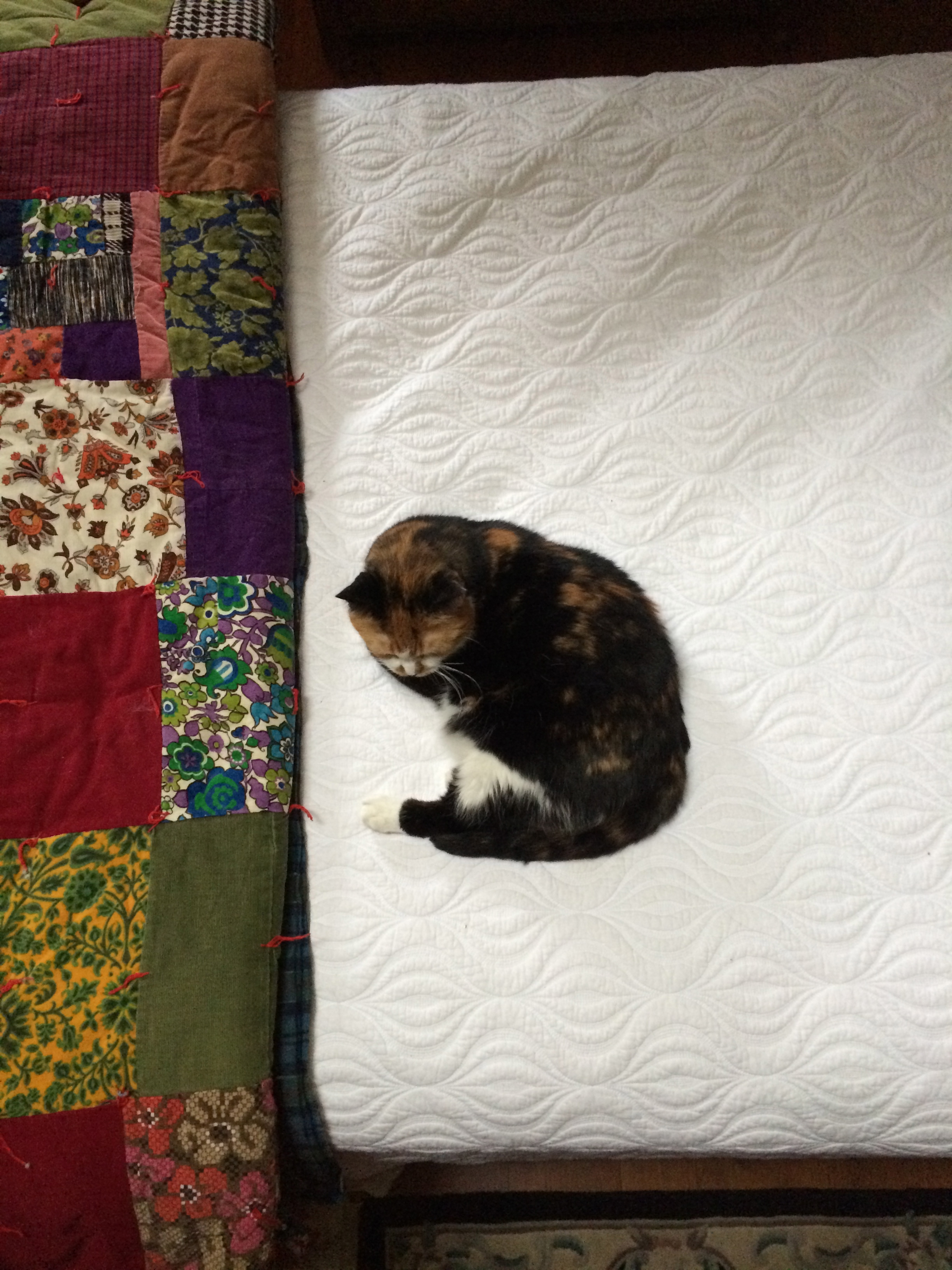My cat Pippilotti (named after Pippilotti Rist) on my brother's bed