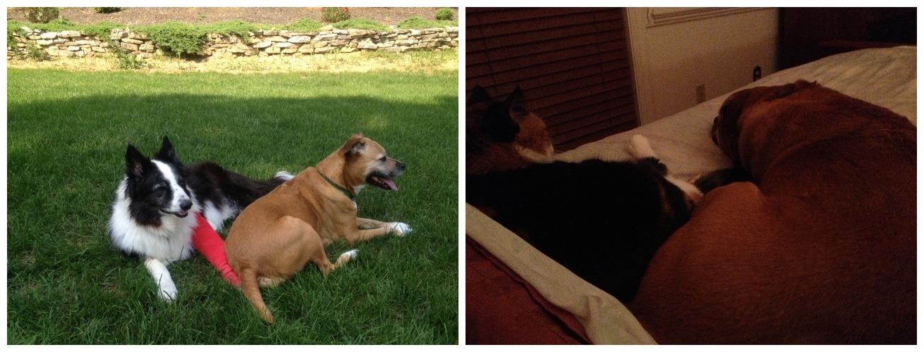 Dugan + Rox; Pippi + Rox