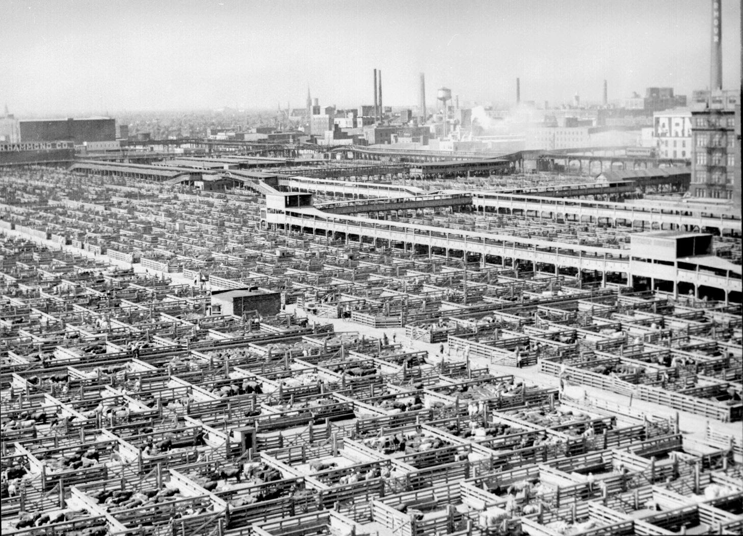 Chicago Stockyards, via Wikimedia